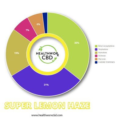 Terps Chart - SUPER LEMON HAZE CBD SHATTER - CBD Shatter With Terps - Hemp CBD Isolate - CBD Hemp Isolate