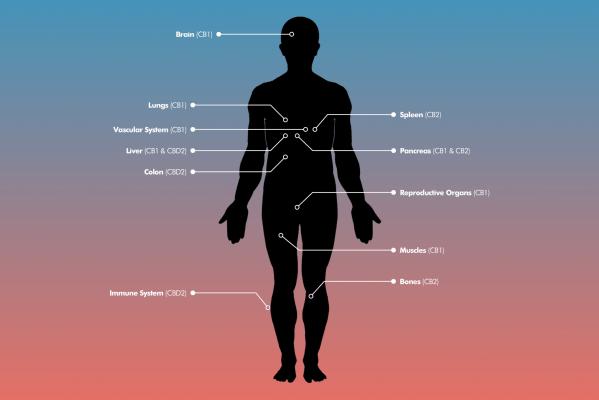 CBD FOR CANCER , HEMP OIL FOR CANCER , HOW TO USE CBD OIL FOR CANCER