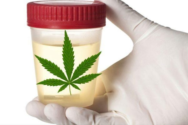 cannabinoids and drug tests